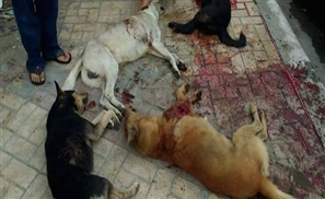 Municipality of Alexandria Massacres Stray Dogs