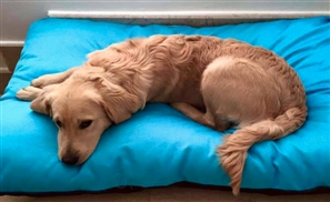 Furbaby: Making Dogs' Lives Better At Home And In Shelters