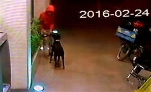 Video: Thief Steals Dog Outside Zamalek Supermarket