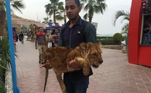 Drugged Lion Cub Used As Photo Prop In Porto Sokhna?