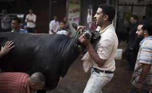 50,000 EGP Fine for Slaughtering Livestock in the Streets this Eid