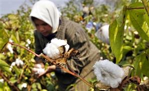 Cairo Cotton Group Announces $100 Million Expansion
