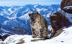 'Planet Earth II' Uses Drones and is Set to be the Best Animal Documentary Ever