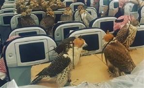 Saudi Prince Takes His 80 Falcons Aboard A Qatar Airways Flight