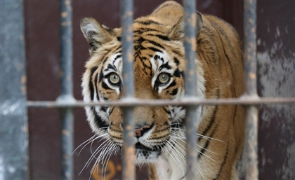 How You Can Save Egypt's Animals From Dying in Its Horrid Zoos