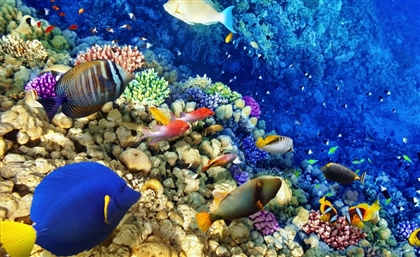 Egypt to Be Featured in Sequel to BBC's Award-Winning Documentary Blue Planet