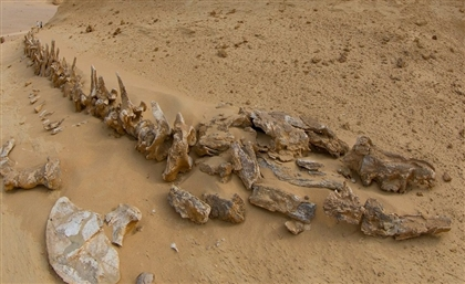 The 5 Craziest Fossil Discoveries in Egypt