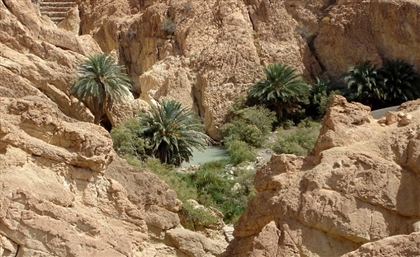Egypt Jumps 34 Places in Yale's Environmental Health Rankings