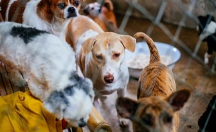 Adopt a Pet at Nasr City's Animal Mercy Festival