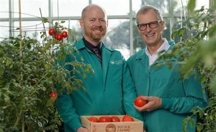 KSA Agritech Red Sea Farms Raises $16 Million Pre-Series A Round