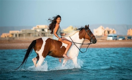 Swim with Horses in Egypt's Red Sea