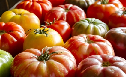 O'Roots Is the Hydroponic Farm That Specialises in Exotic Tomatoes