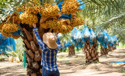 Explore Ismailia's Dazzling Date Farms with This Unique Day Trip