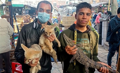 Egypt to Crack Down on Sale of Wild Animals