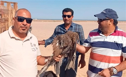 Egypt Cracks Down on Poaching Migratory Birds in Red Sea