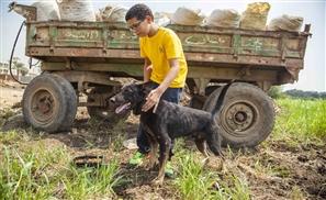 Changing Society Through Saving Animals