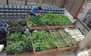 Schaduf - An Agricultural Revolution in Cairo