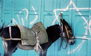 Falafel Saves Man, Donkey Dies