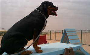 Saudi Police Arrests Two People for Organising a Dog Pageant