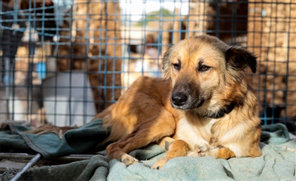American Woman Airlifts 14 Dogs and a Cat out of Egypt to New York